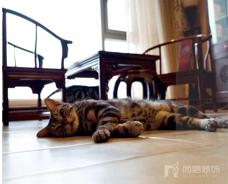 壹千栋别墅装修业主养的猫