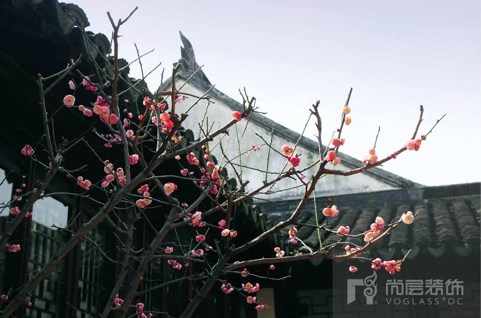 銀麗高爾夫別墅裝修業主院子中的花