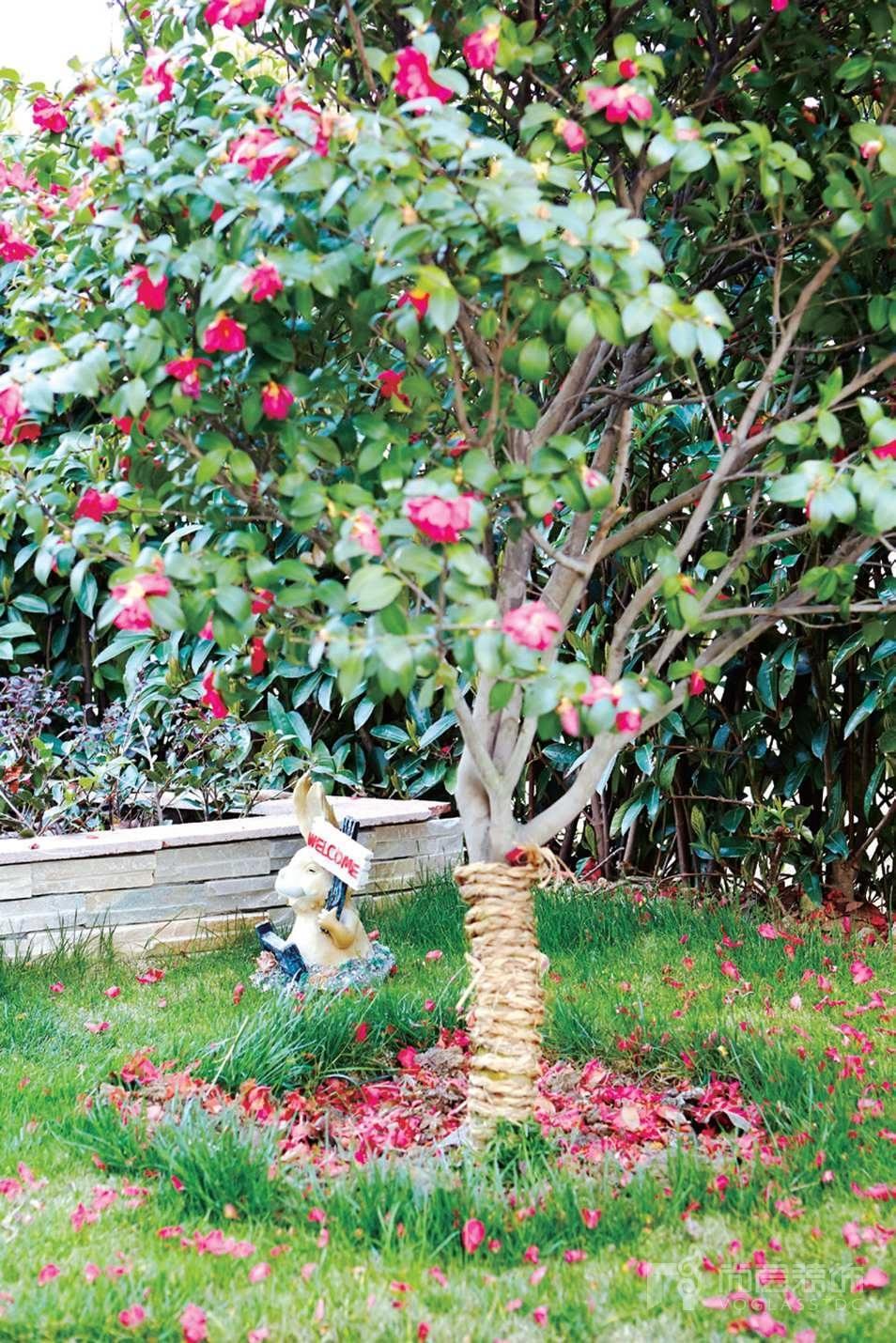 银丽高尔夫别墅装修业主院子中的花树